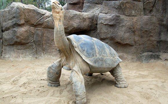 Galapagos Tortoise Images