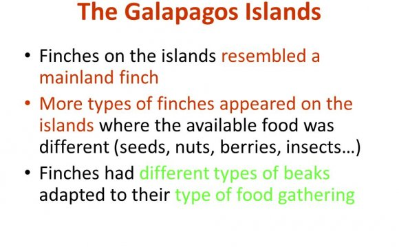 The Galapagos Islands Finches