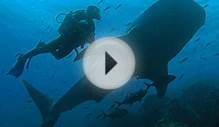 Diving Galapagos: Diving Cruises With Quasar Diving In The