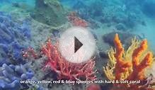 Nightcliff Island Dive on Development Site | Darwin NT