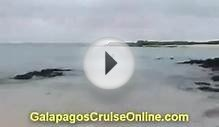 Sea turtles | Galapagos Islands Video